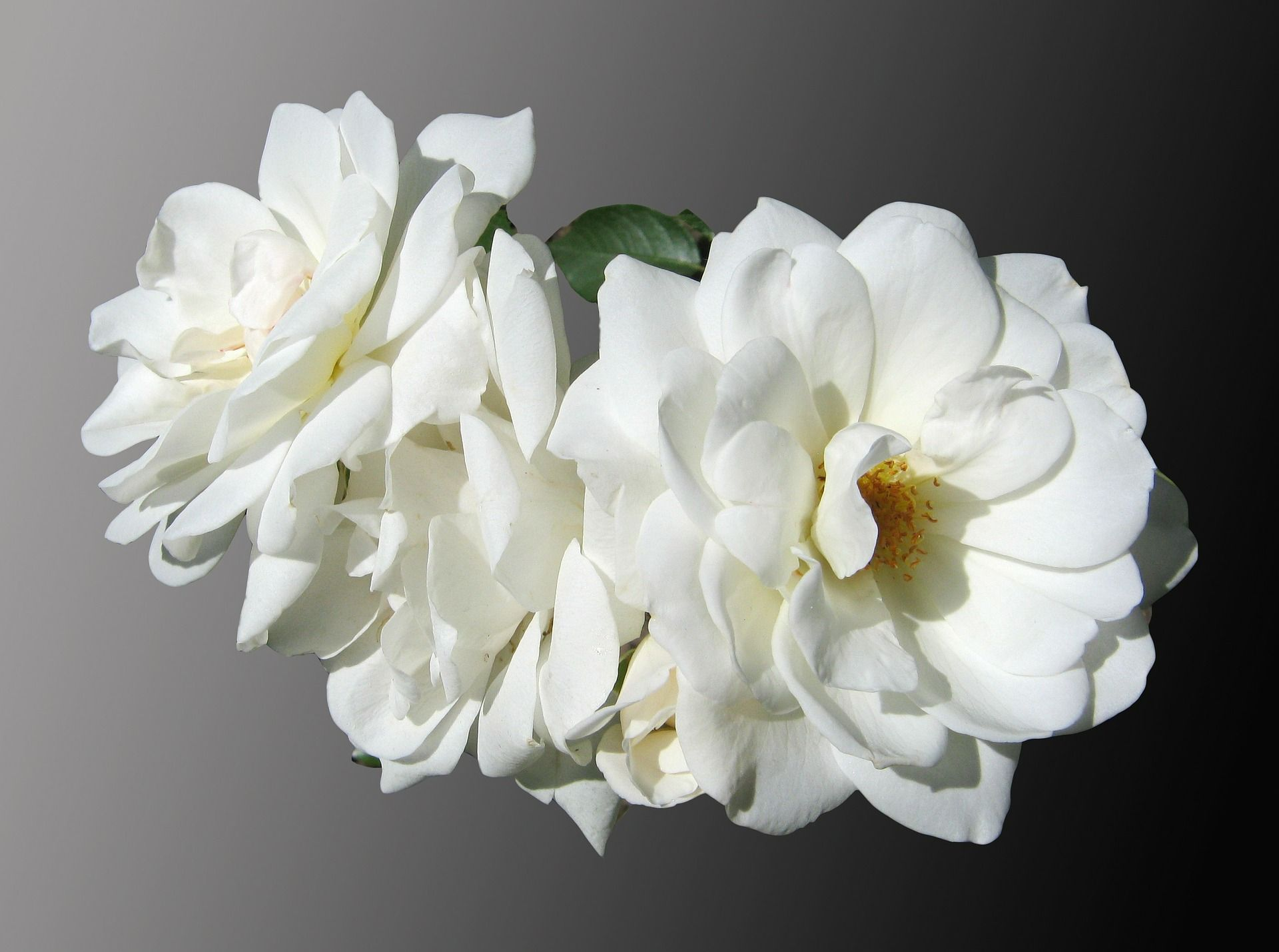 flowers-97681_1920
